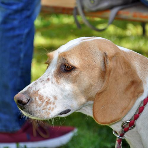Sommerfest_Hunde_2015-08-23-11h32m45.jpg