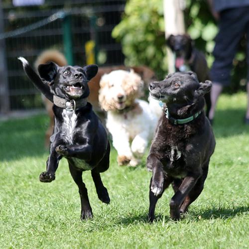 Sommerfest_Hunde_2015-08-23-11h34m03.jpg