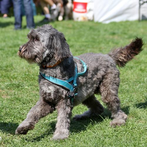 Sommerfest_Hunde_2015-08-23-11h37m22.jpg