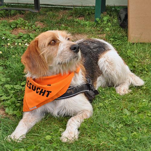 Sommerfest_Hunde_2015-08-23-11h39m08.jpg