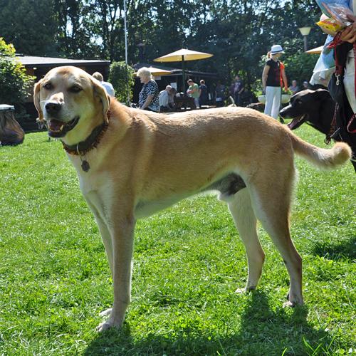Sommerfest_Hunde_2015-08-23-11h40m33.jpg