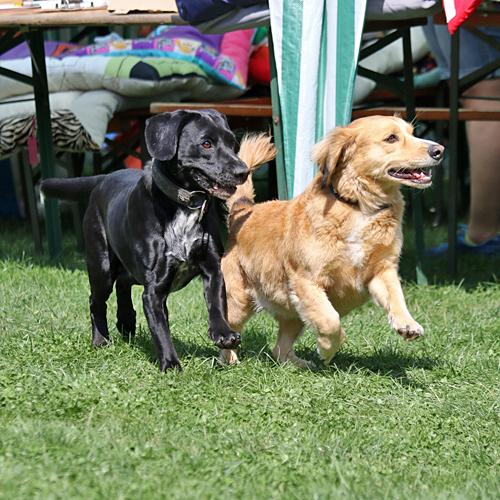 Sommerfest_Hunde_2015-08-23-11h40m37.jpg