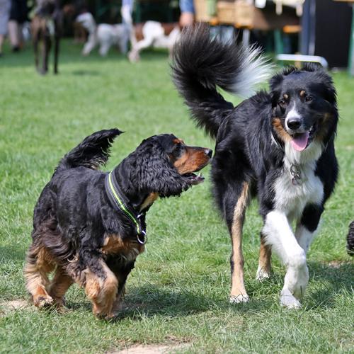Sommerfest_Hunde_2015-08-23-12h06m38.jpg