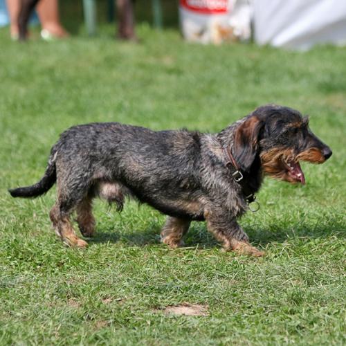 Sommerfest_Hunde_2015-08-23-12h06m49.jpg