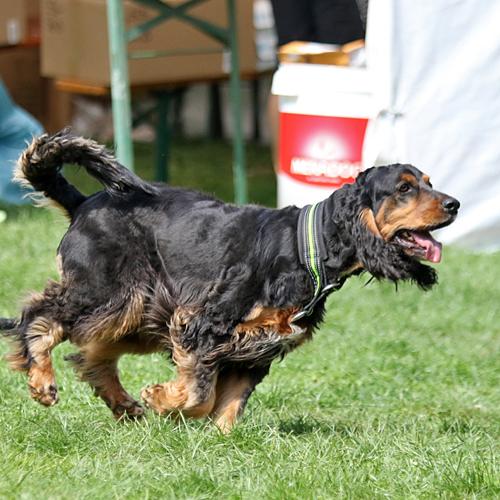 Sommerfest_Hunde_2015-08-23-12h07m36.jpg