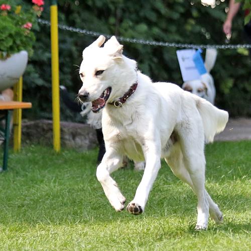 Sommerfest_Hunde_2015-08-23-12h08m42.jpg