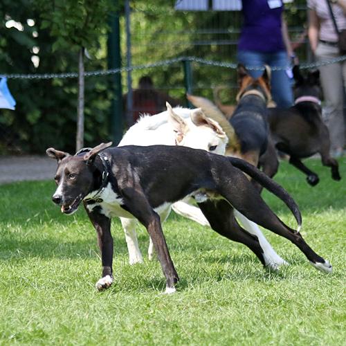 Sommerfest_Hunde_2015-08-23-12h09m02.jpg