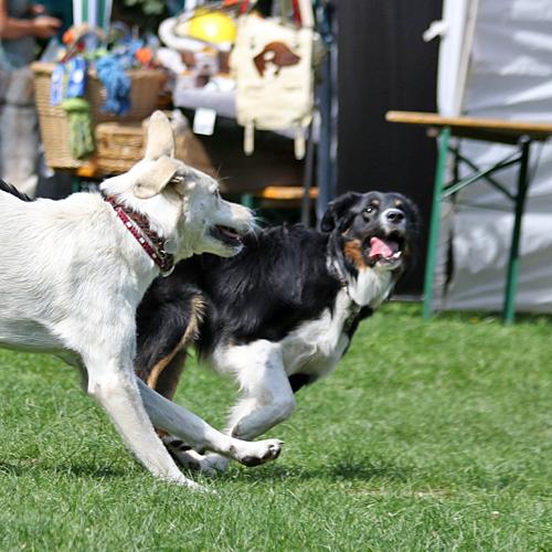 Sommerfest_Hunde_2015-08-23-12h09m43-1.jpg