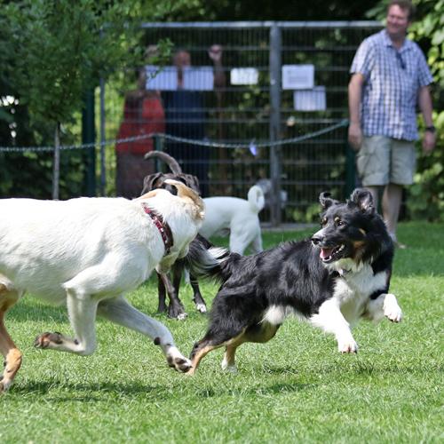 Sommerfest_Hunde_2015-08-23-12h09m43.jpg