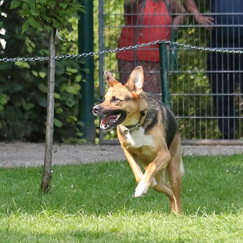 Sommerfest_Hunde_2015-08-23-12h09m51.jpg