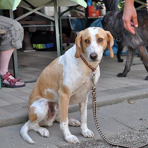 Sommerfest_Hunde_2015-08-23-12h31m06.jpg