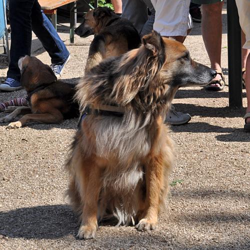 Sommerfest_Hunde_2015-08-23-12h58m52.jpg