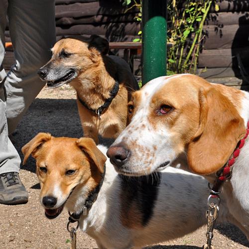 Sommerfest_Hunde_2015-08-23-13h04m29.jpg