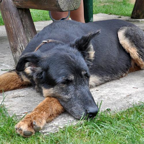 Sommerfest_Hunde_2015-08-23-16h17m56.jpg