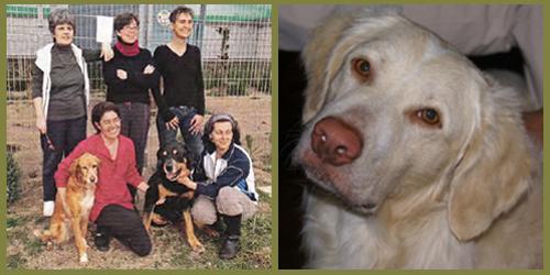 Bilder aus partner hund 10 2013 das team von arca sarda und ettore