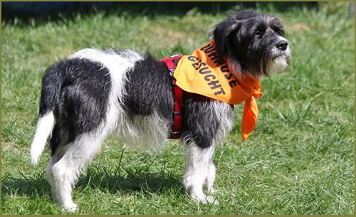 Haben Sie Schon Einmal Daran Gedacht, Sich Ehrenamtlich Für Den Tierschutz  Zu Engagieren? Lieben Sie Hunde? Wir Suchen Unterstützung Für Unser Team  Hunde Im ...