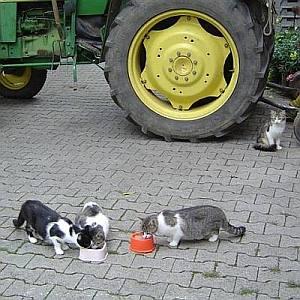 oberpfalz_traktor.jpg