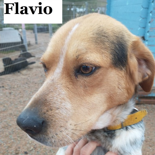 flavio01.jpg