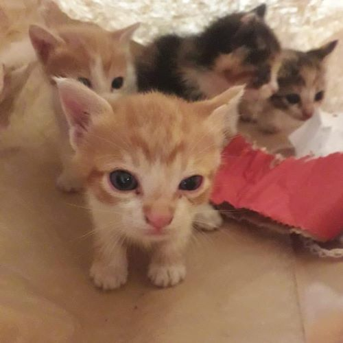 o-kitten_001.jpg